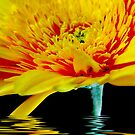 Yellow Gerbera by Rainy