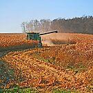 Field Work by Jack Ryan
