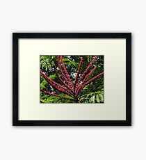 Jungle's Colours - Colores De La Selva Framed Print