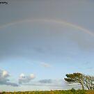 Rainbow by missemilyo