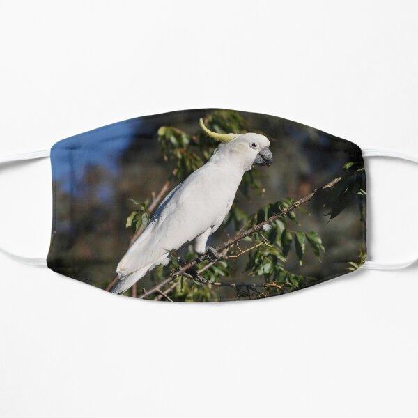 Sulphur-crested Cockatoo, Bungendore, Australia 2013 Flat Mask