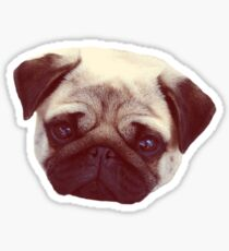 Little Pug Sticker