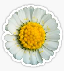 Big daisy  Sticker