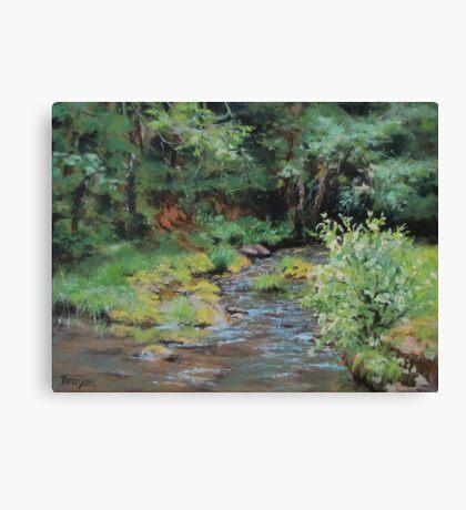 Shady Creek Canvas Print