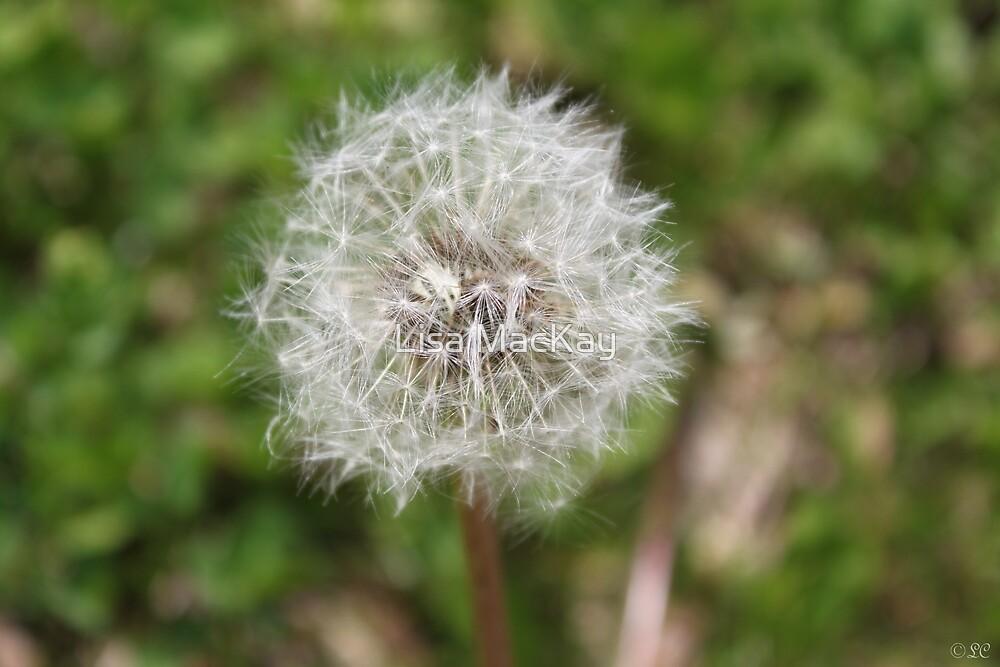 Then the dandelion dies... by Lisa MacKay