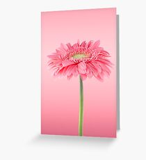 Pink gerbera daisy flower Greeting Card