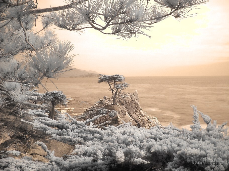 Cypress tree infrared photo by Jane Linders