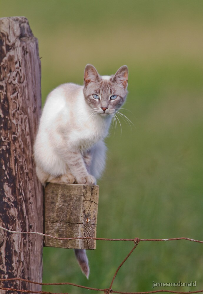 Cool cat by jamesmcdonald