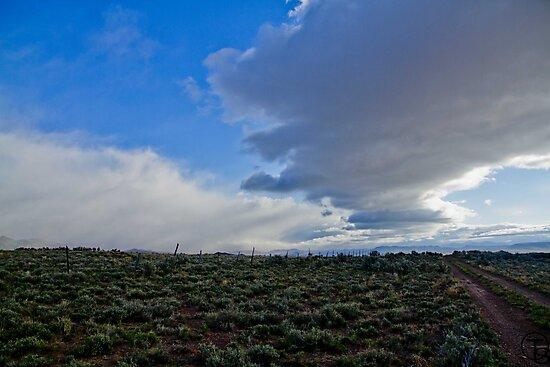 Western Sky by Tabitha  Smith