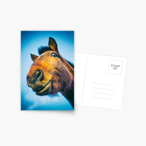 Dark Bay Horse Postcard