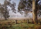 Winter in the Riverina by Rosalie Dale