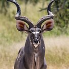 Kudu by Will Hore-Lacy