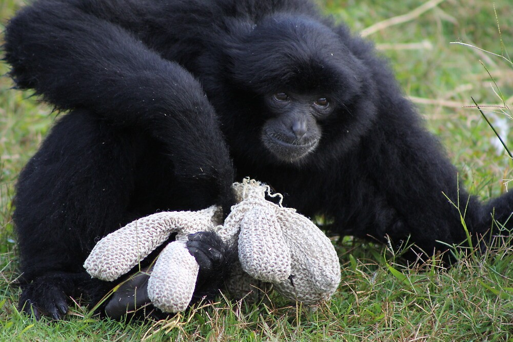 Siamang Gibbon by knelliec