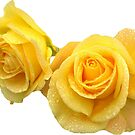 yellow roses by lazyville