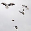 Feed the birds by almaalice