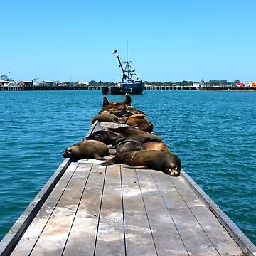 California Sea Lions and Harbor Seals on a dock in Crescent City, CA by Karlim