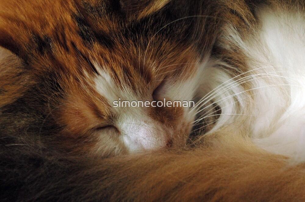 www.simfoto.org by simonecoleman