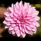 The summer flowers.  by imagic