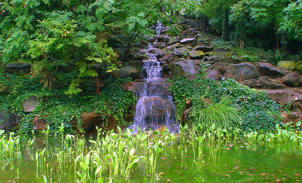 Green Pool by Carolyn  Fletcher