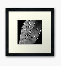 Macro water droplets study II Framed Print