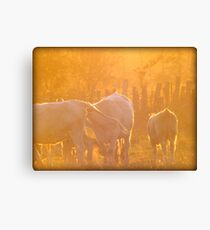 Sunset Cows Canvas Print