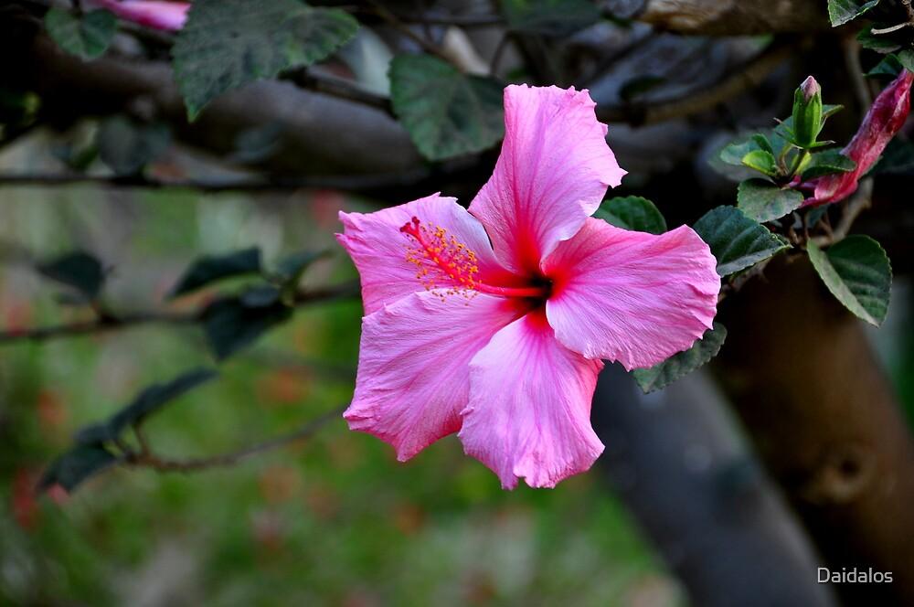 Chile: Flower by Daidalos