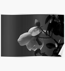 Magnolia 0718 Poster