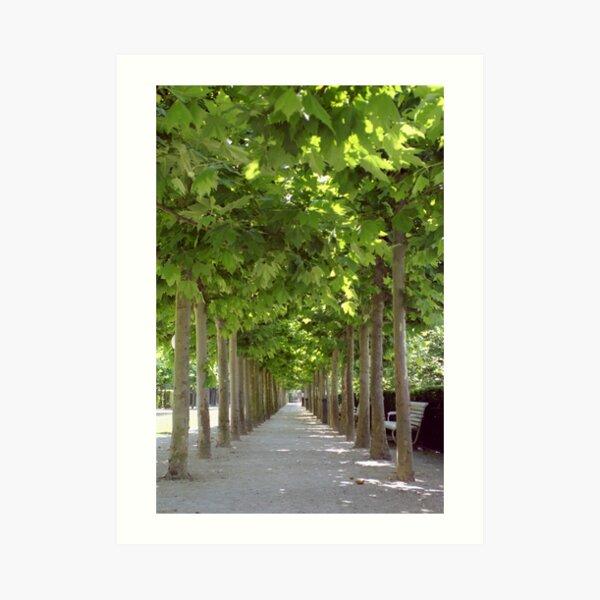 Avenue of Trees, Brussels Kunstdruck