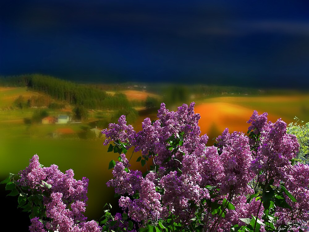 Lilac Time by Igor Zenin