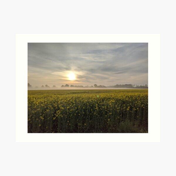 Beeindruckendes Rapsfeld im Sonnenaufgang Kunstdruck