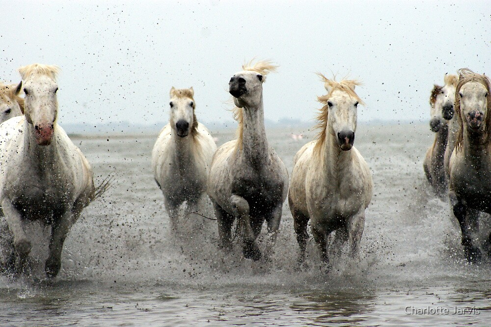 White Horses 3 by Charlotte Jarvis
