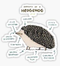 Anatomy of a Hedgehog Sticker