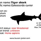 Tiger shark by toucanjester