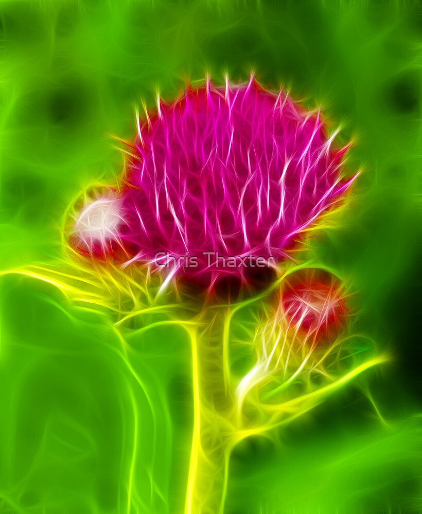 Thistle Fractilius by Chris Thaxter