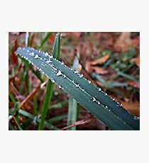 Teardrops of Rain Photographic Print