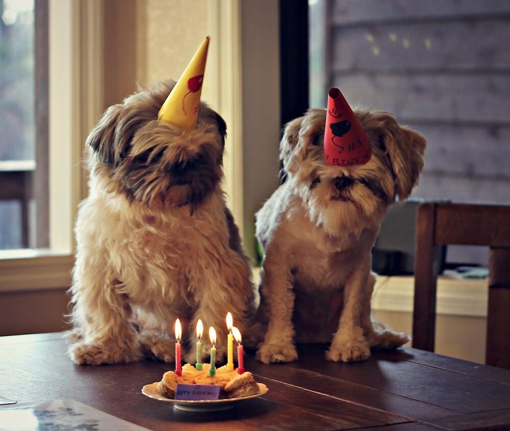 Doggie Birthday Party!  by savedbygrace