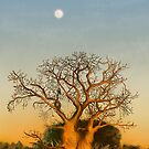 The story of Baobabs by Fiery-Fire