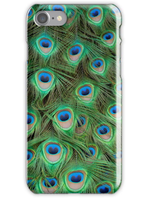 Peacock Feathers by Chris Thaxter