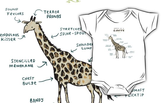 anatomy of a giraffe Giraffe skull and neck vertebrae with stand recognized the world over by their long necks, long legs and distinctive coloration, giraffes can stand over 18 feet tall and weigh over 4200.