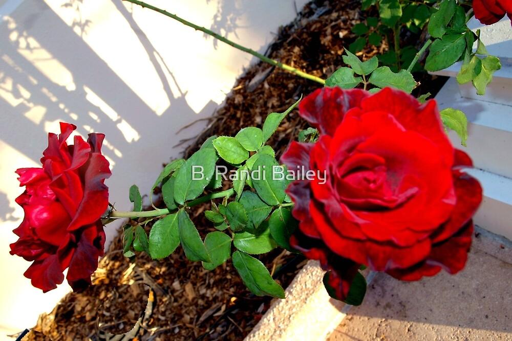 Roses along the path by ♥⊱ B. Randi Bailey