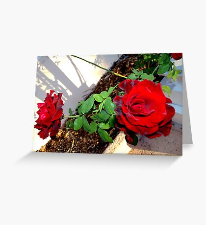 Roses along the path Greeting Card