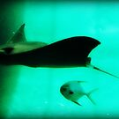 Sting Ray and Fish by Shawty's Photography