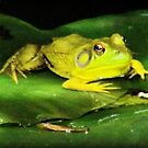 Greenest Frogg by Shawty's Photography