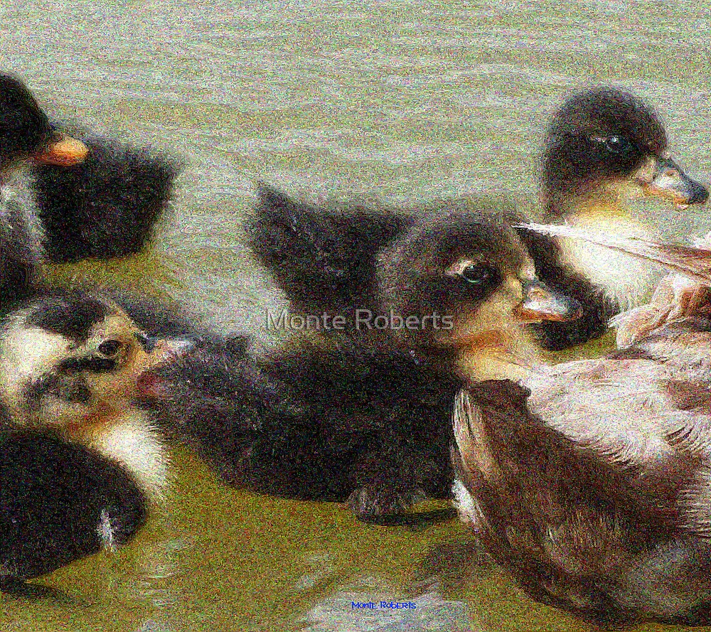 Little Duckies by Monte Roberts