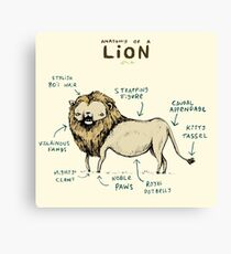 Anatomy of a Lion Canvas Print