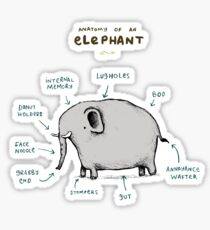 Anatomy of an Elephant Sticker