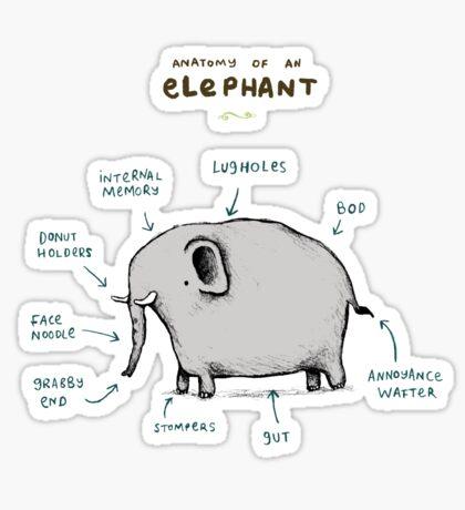 Anatomy of an Elephant Sticker