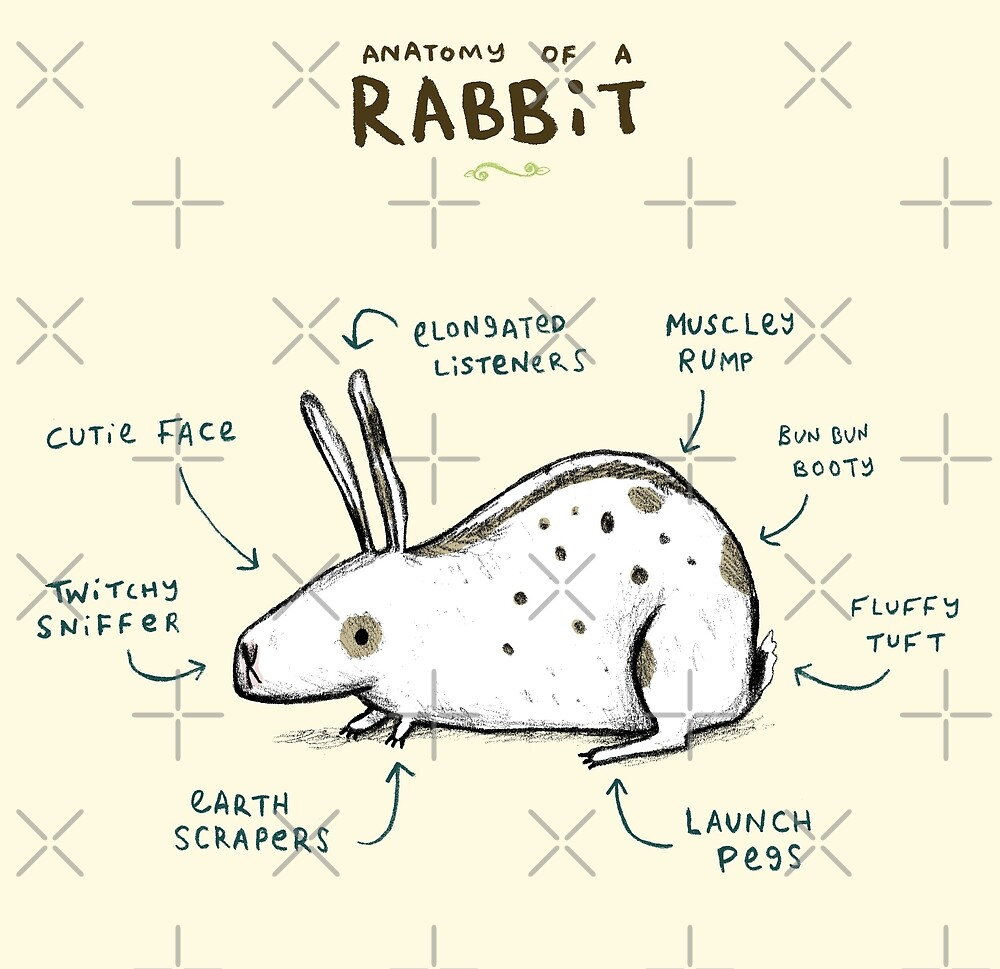 Anatomy of a Rabbit\