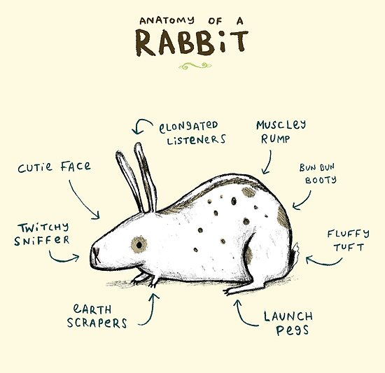 Anatomy Of A Rabbit Posters By Sophie Corrigan Redbubble