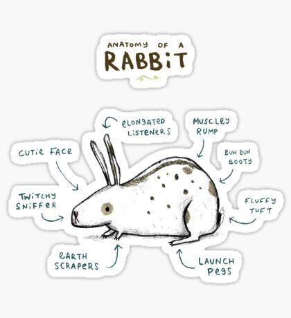 Anatomy of a Rabbit Sticker